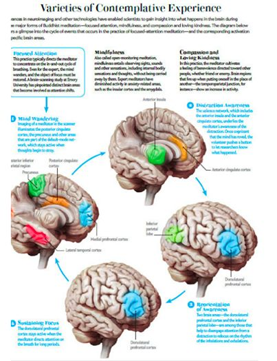 How the Brain Changes When You Meditate