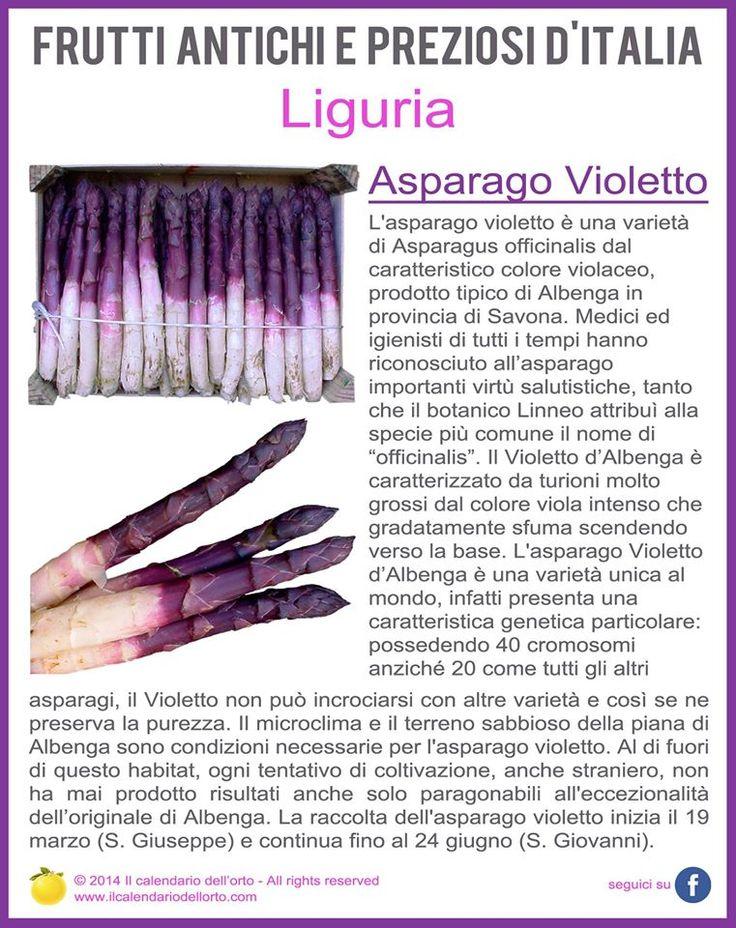 Liguria: Asparago Violetto