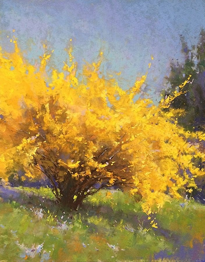 Spring Forsythia by Jacob Aguiar  ~ 14 x 11