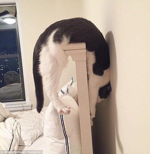 5人の里親さんに拒否された猫。6人目の里親さんに出会うと…