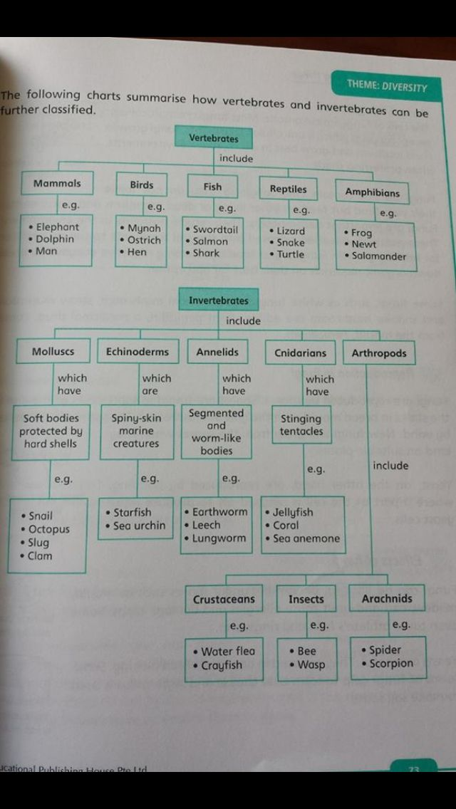 Chart on Vertebrates and Invertebrates
