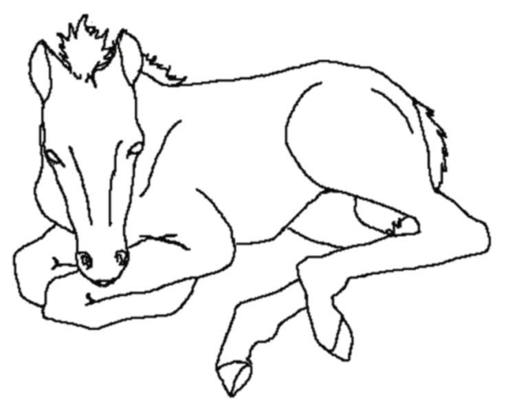 ausmalbilder pferde  malvorlagen tiere ausmalbilder