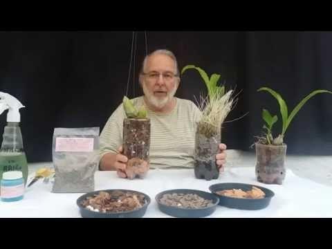Como fazer mudas ( keike) de Orquídeas de crescimento vertical e Revitalizá-las. - YouTube