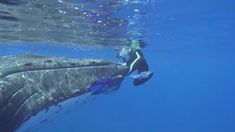 A Caring Humpback Whale Physically Protects a Vulnerable Diver From an Incoming … – Mein Liebling