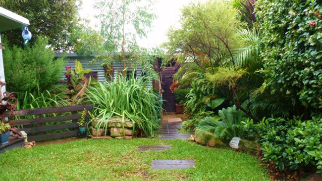 104 best images about dacey garden suburb on pinterest for Small garden trees queensland
