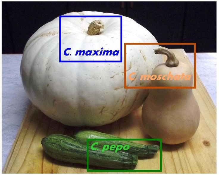 Roots 'n' Shoots: Squash & Pumpkin: How To Grow − Fruit(s) of the Month