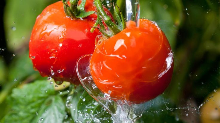 """""""Hexengebräu"""" hält Tomaten gesund. (Quelle: Thinkstock by Getty-Images)"""