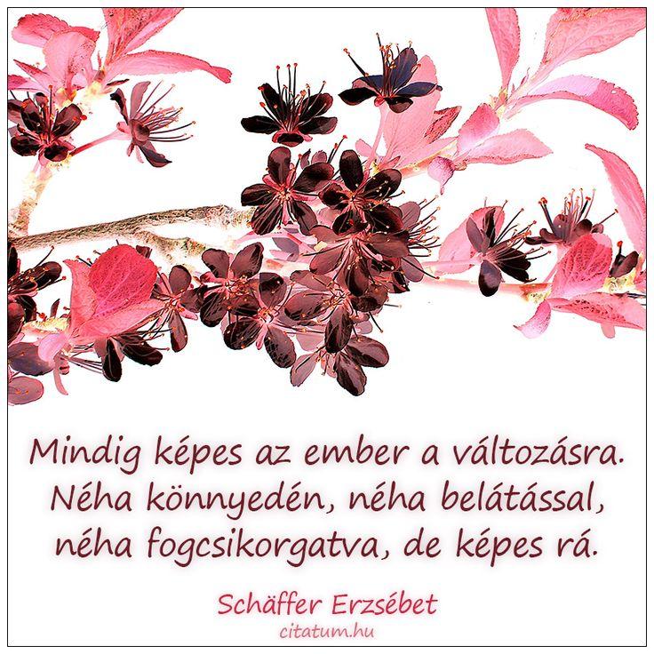 Schäffer Erzsébet gondolata a változásról.