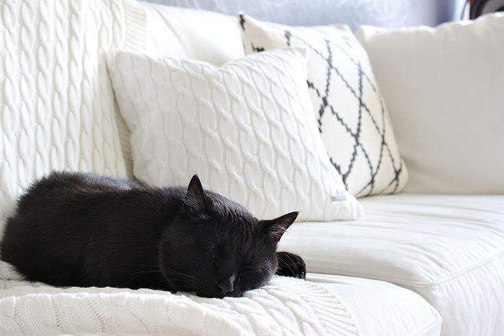 Olohuone livingroon decor interior black cat