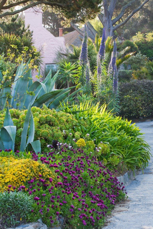 Agave Mixed Into The Cottage Style Garden Good Idea For