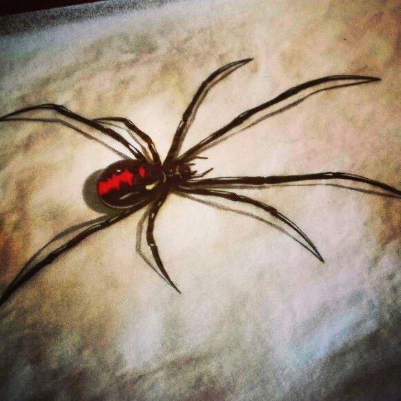 Redback spider