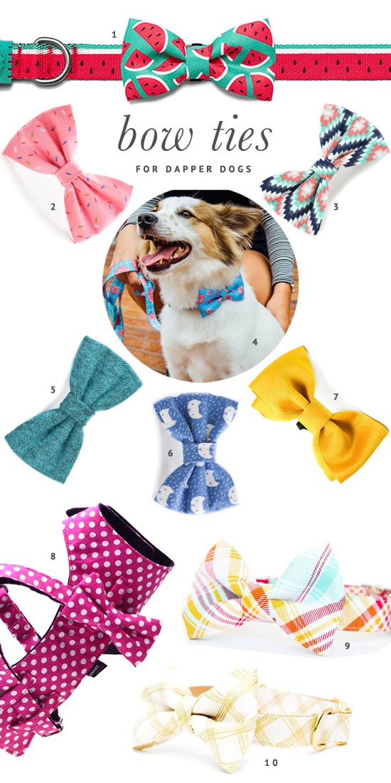 The BEST dog bow ties for every shape and size of dog. Includes patterned bow ties, collar bow ties, harness bow ties and more - plus where to buy.