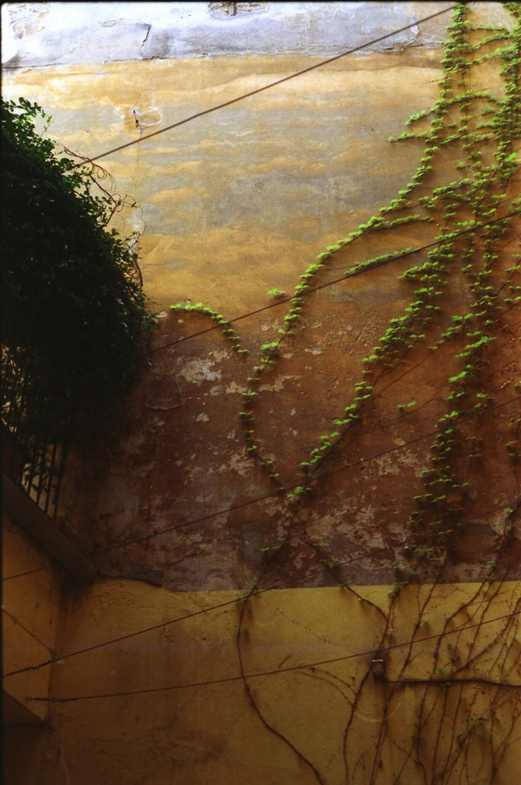 Ivy Wall, color in Italy