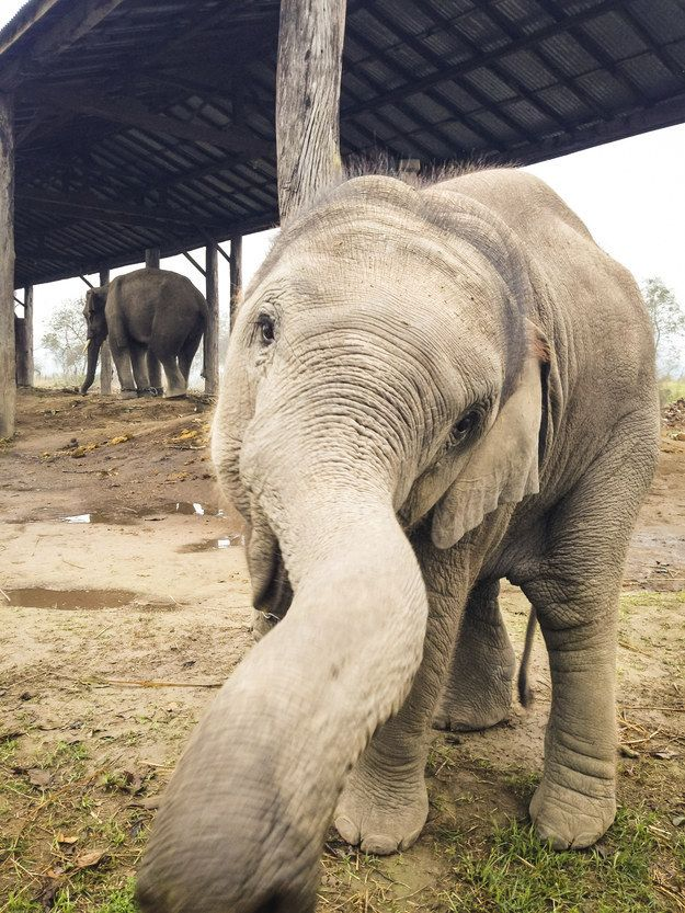 Basically, the world would be 100% less special without these guys. | 22 Photos That Prove Elephants Make The World A Better Place