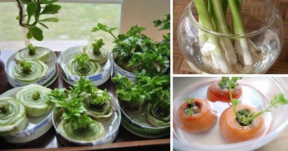 Coltivare frutta, verdura e piante a casa è una tendenza che, per fortuna, sta prendendo [Leggi Tutto...]