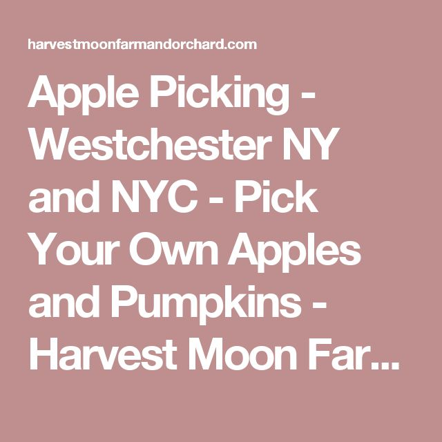 Apple Picking - Westchester NY and NYC - Pick Your Own Apples and Pumpkins - Harvest Moon Farm and O