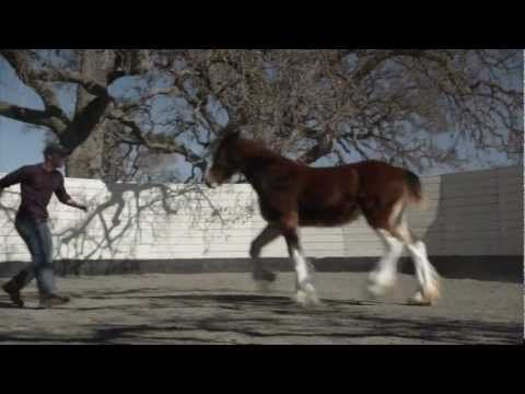 """2013 Budweiser Super Bowl Ad — Extended Version of The Clydesdales: """"Brotherhood"""" - Love love love this!"""