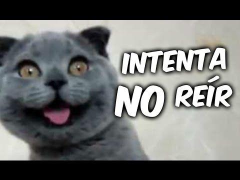 ANIMALES CHISTOSOS Y GRACIOSOS #02 | Vídeos de Risa de Animales (Perros, Gatos y más) - YouTube