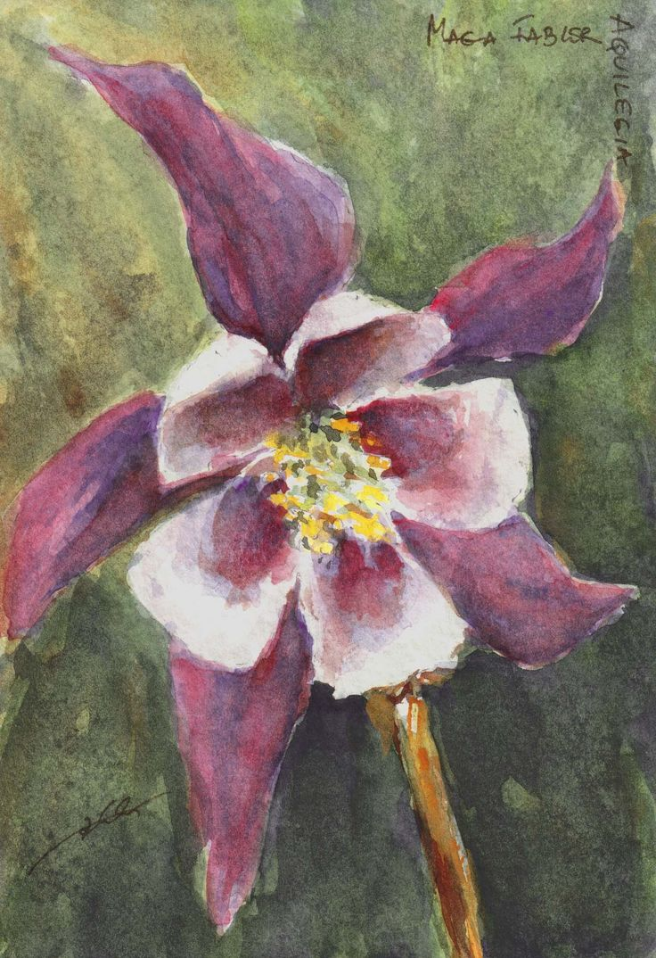 Purple colombine by Maga Fabler; watercolor