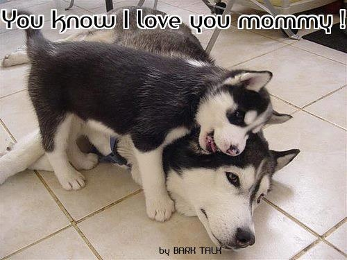 All I can say is...    AHWWWWWW!!!