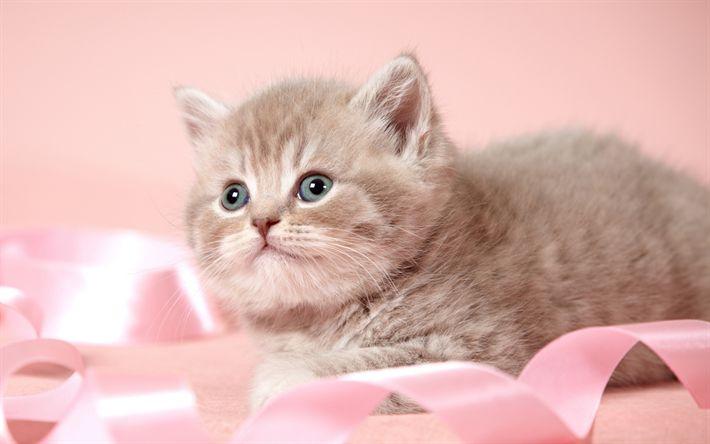 Descargar fondos de pantalla Lindo gatito peludo gatito gris, simpáticos animales, mascotas, cinta rosa, Gatos