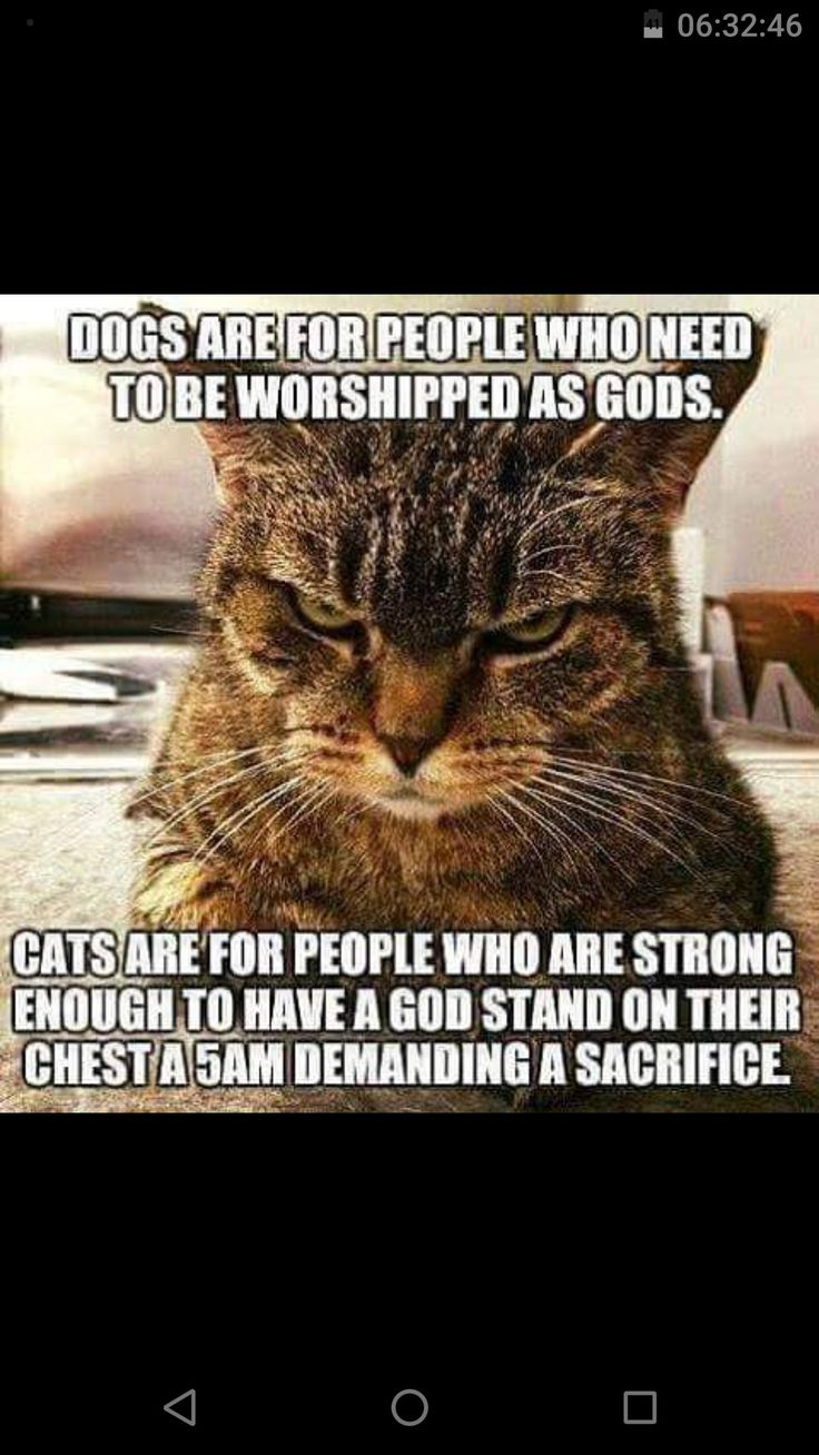 """""""cats are for people who are strong enough fo have a God stand on their chest at 5am demanding a sacrifice"""". :)"""
