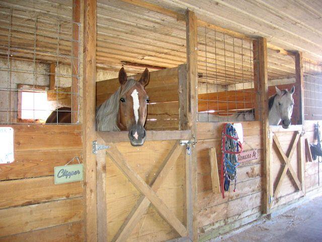 Horse Stall Ideas House Interior Half Doors