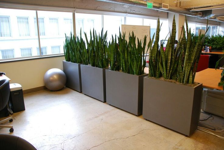 Big vases as office space divider?