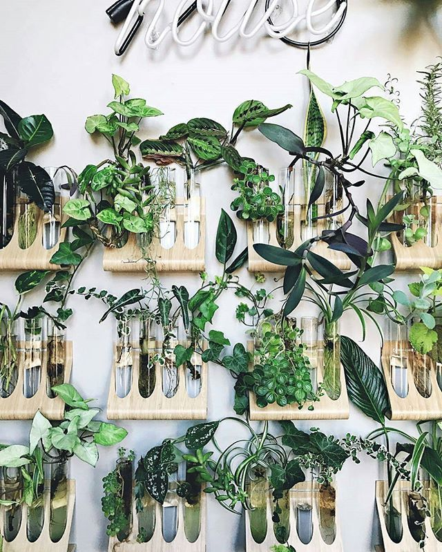 "Laboratory experiment? Nope, ""just"" propagating and growing some beautiful cuttings in @ikeausa spice racks!  :@hiltoncarter #urbanjunglebloggers"