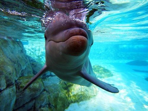 Dolphins: Bucketlist, Dreams, Dolphins, Pet, The Ocean, Snorkeling, The Buckets Lists, Sea World, Buckets Lists Ideas Lists
