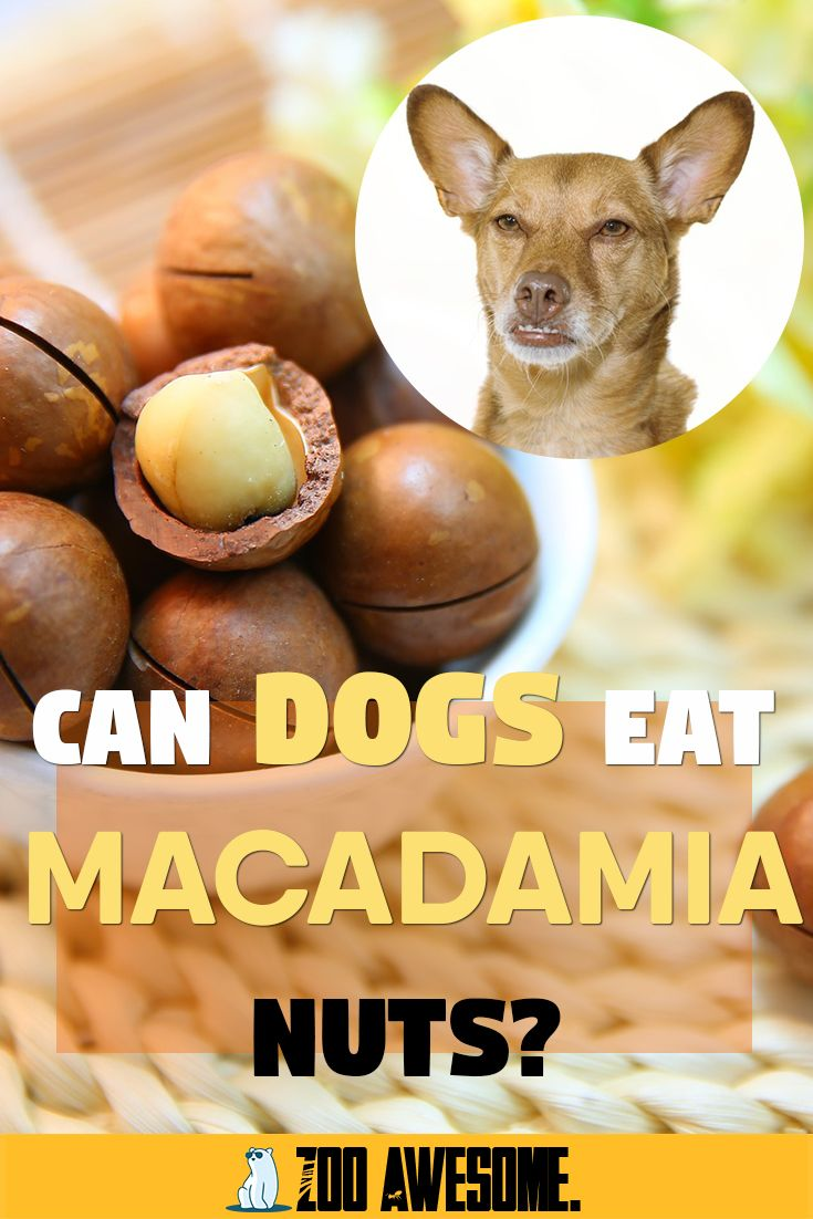 Can Dogs Eat Macadamia Nuts Can Dogs Eat Dog Food Recipes Dog Food Storage Containers