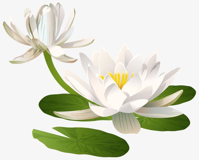 Pure Snow Snow Lotus Clip Art Digital Flowers Art Images