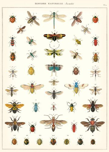 Cavallini & Co. Natural History Insects Decorative Decoupage Poster Wrapping Paper Sheet Cavallini & Co.,http://www.amazon.com/dp/1619922169/ref=cm_sw_r_pi_dp_2y5dtb061WVG2P8N