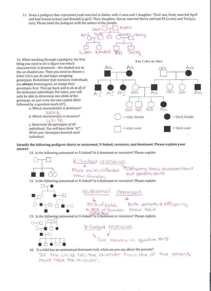 Genetics Pedigree Worksheet Answer Key in 2021   Biology ...