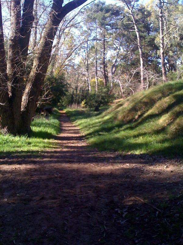Bosque original plantado por Carlos Gesell