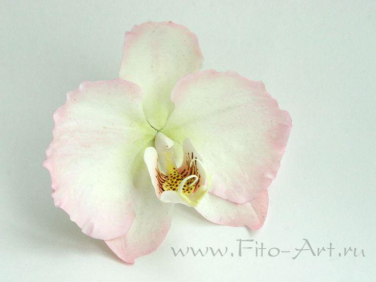 Свадьба : Белый фаленопсис - Fito Art