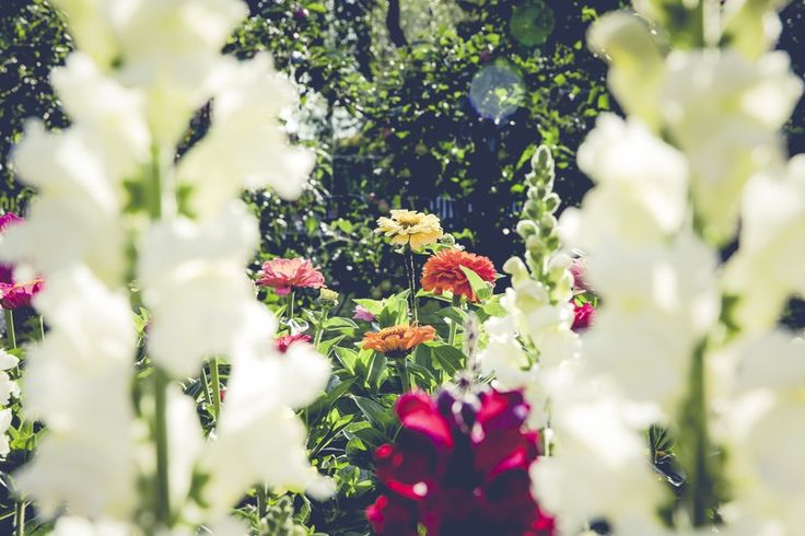 10 Steps to Planning a Beautiful Spring Garden