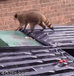 If Cats Can Do It, It Must Be Easy (poor little guy)