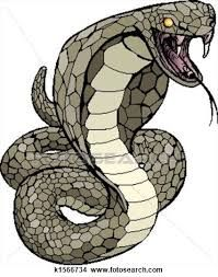 Image result for snake graphic artwork