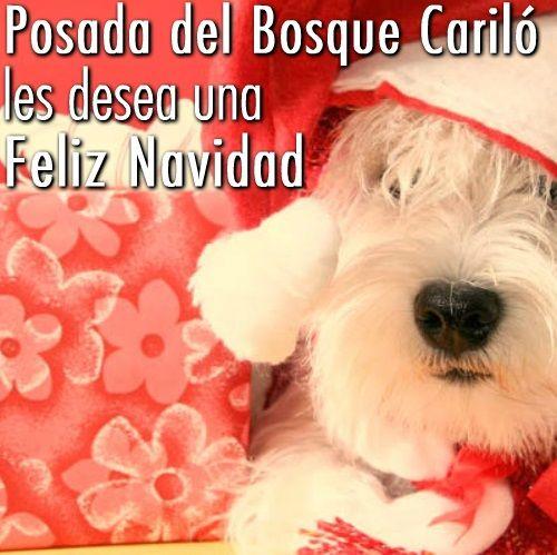 TE DESEAMOS UNA FELIZ NOCHE BUENA YA NAVIDAD !!.  #nochebuena #navidad #posdadelbosque #playa #felicesfiestas #todosunidos #amocarilo