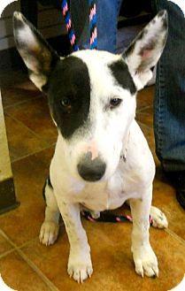 Dogs For Adoption Amarillo Tx