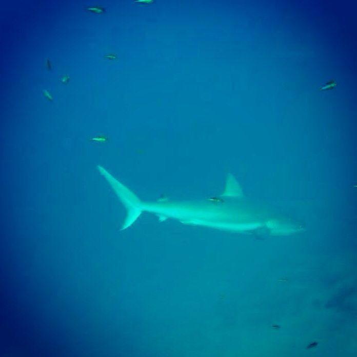 Gran encuentro de tiburones en Blue Wall San Andrés Island. ✌️❤️