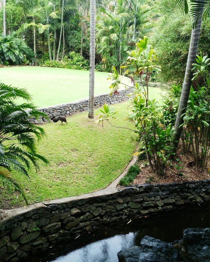 Wedding Lawn - Brisbane Botanic Gardens