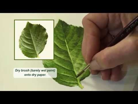 Learn how to: Paint Leaves in Watercolor ~ Mix Color ~ Create Beautiful and Successful Paintings with Susan's Five Crucial Elements! :: Watercolor and Oil Painting – Roses, Birds, Still lifes, Figurative Paintings, Watercolor DVDs- Susan Harrison-Tustain