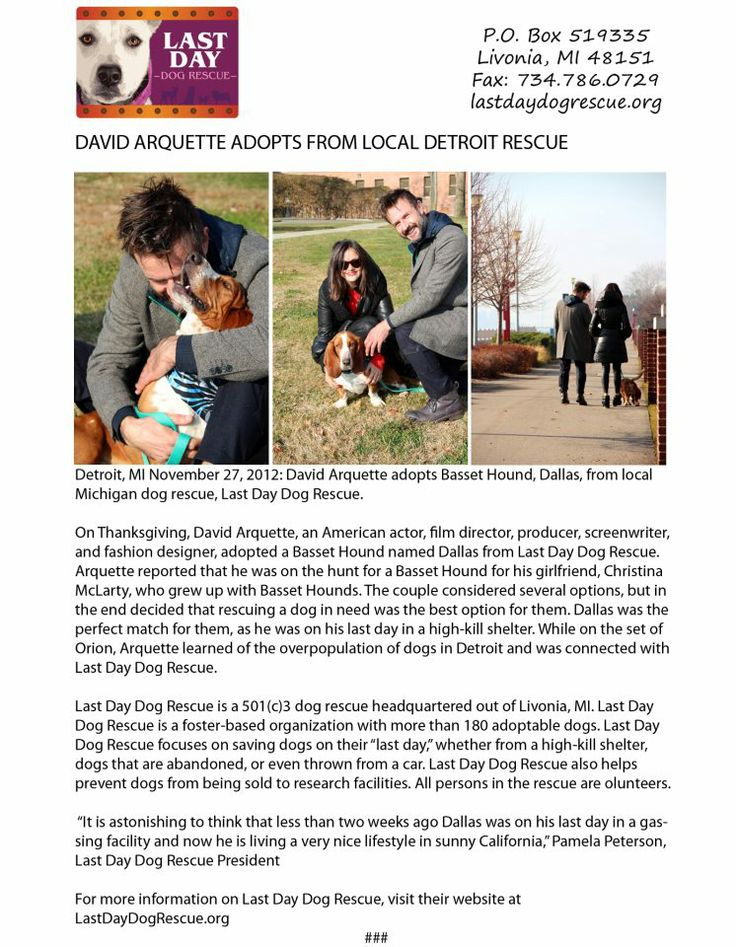 Actor David Arquette has a new pet — a basset hound named Dallas that he adopted from Last Day Dog Rescue in Detroit, the organization announced today. The group said Arquette adopted Dallas on Thanksgiving for his girlfriend, Christina McLarty, who grew up with basset hounds.