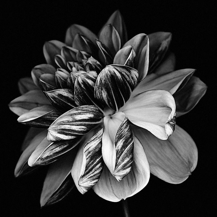 Black and white floral painting-8695