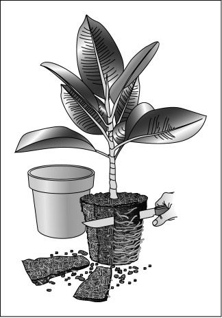 Repot a plant