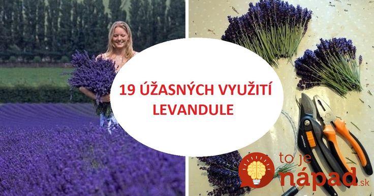 Zlikviduje vši, odstráni pleseň a vylieči herpes: 19 využití levandule, ktoré by mal poznať každý, kto zázračnú bylinku pestuje!