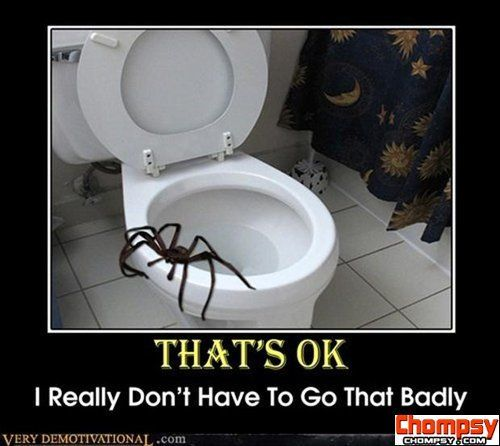 demotivational posters spiders Funny Picture