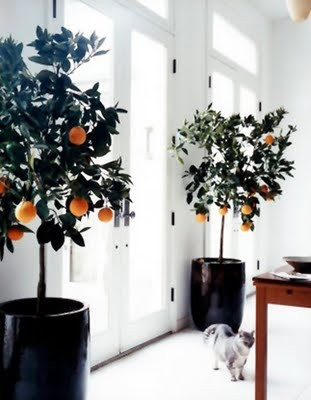 potted trees in black pots
